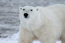 eau-de-soi-totem-ours.jpg